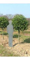 Prunus laurocerasus - Kirschlorbeer Kugel auf Stamm