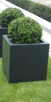 Buxus sempervirens ball in a Planter