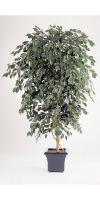Kunstpflanze - Ficus deluxe