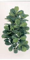 Kunstpflanze - Ficus Lyrata Busch