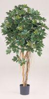 Kunstpflanze - Schefflera variegata