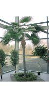 Kunstpalme - WASHINGTONIA Palme giant