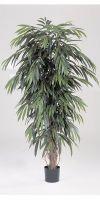 Artificial- Ficus  longfolia liana