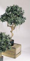 Artificial- Ficus  panda on trunk II